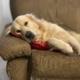pensione per cani padova